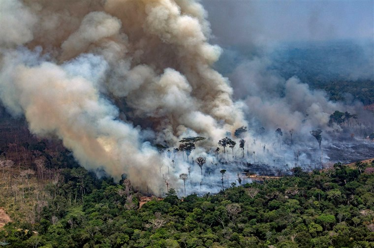What is Going on in the Amazon Rainforest?