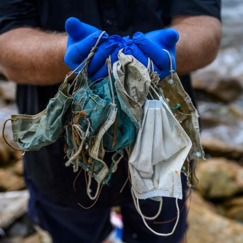 Hundreds of disposable face masks are found in the ocean after being thrown away. This litter poses a threat to ocean wildlife and pollutes our waters. (from the New York Times)