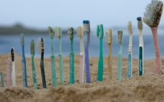 Toothbrushes lined up on a beach display the amount of waste caused by everyday items.